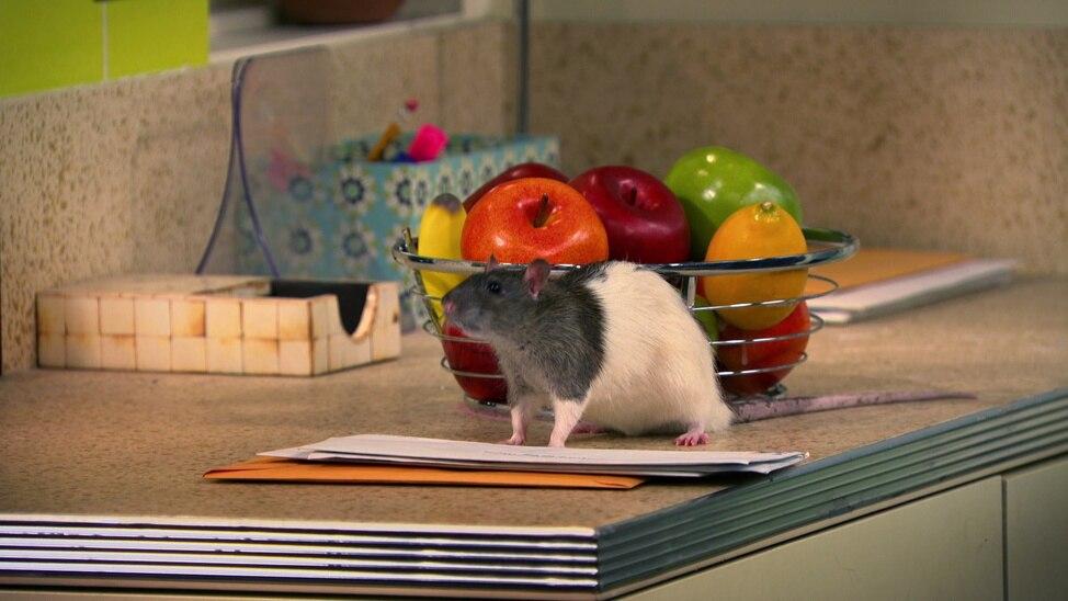 Episode 34 - The Amazing Rat Race