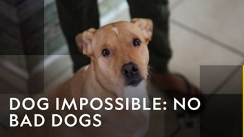 Dog Impossible: No Bad Dogs