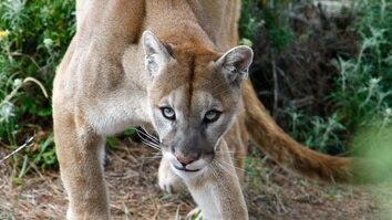 California's Wild Coast