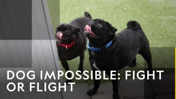 New: Dog Impossible: Fight Or...