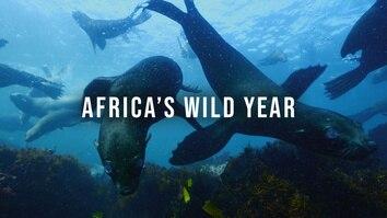 Africa's Wild Year
