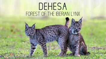 Dehesa- Forest Of The Iberian Lynx
